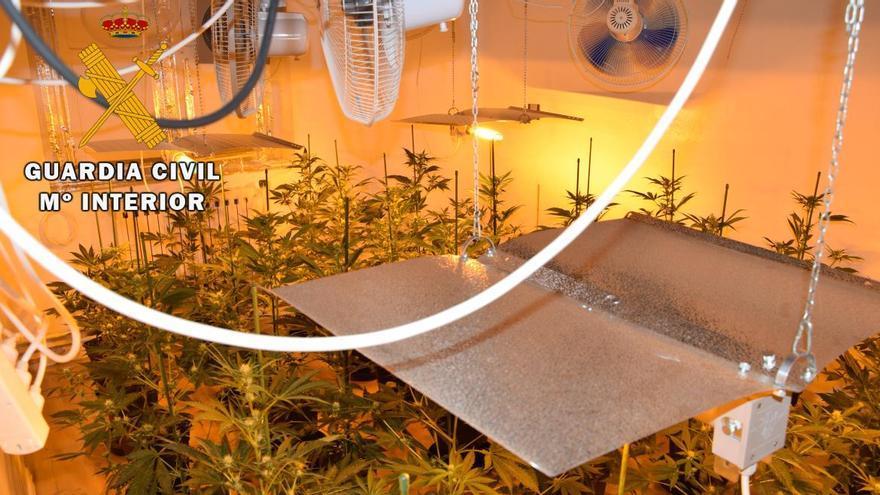 Detenido un vecino de Las Regueras que tenía una gran plantación de marihuana en su domicilio