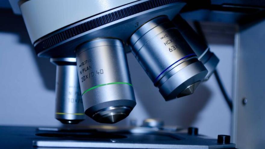 Qué son y cómo funcionan nuestras células asesinas naturales y por qué podrán usarse para combatir el cáncer