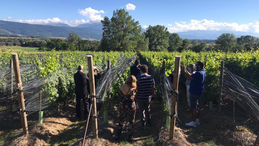 Recuperada la vinya, la Cerdanya s'obre a l'enoturisme