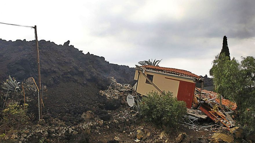 """Una palmera en Zamora: """"Las ayudas tienen que llegar ya"""""""