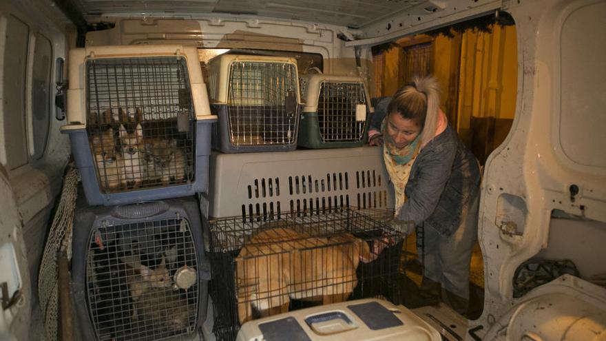 Perros rescatados en Alicante