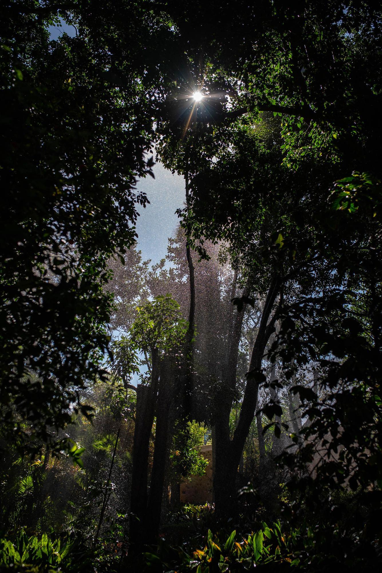 Reapertura Jardín Botánico