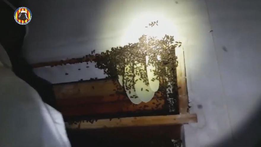 Ya es primavera para las abejas