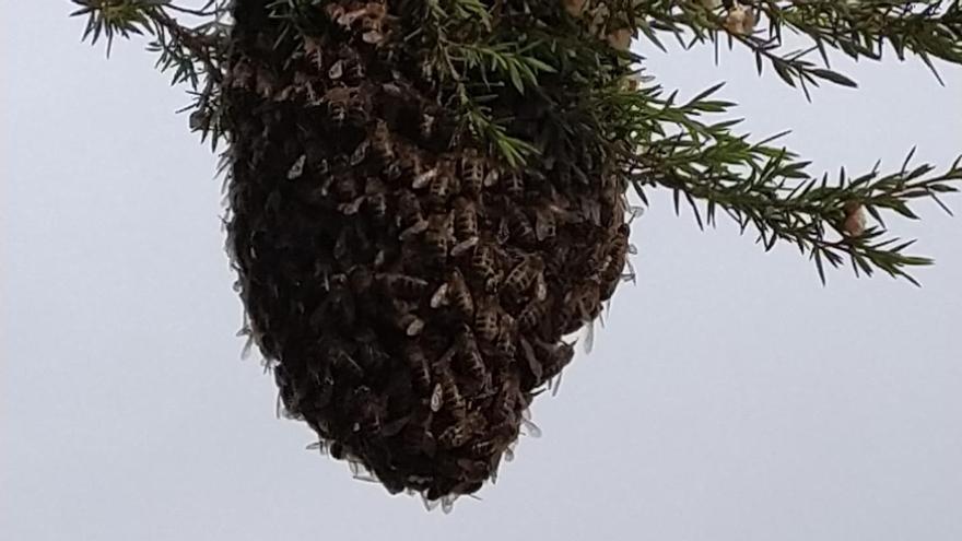 Un enjambre de abejas 'okupa' una casa de Vigo