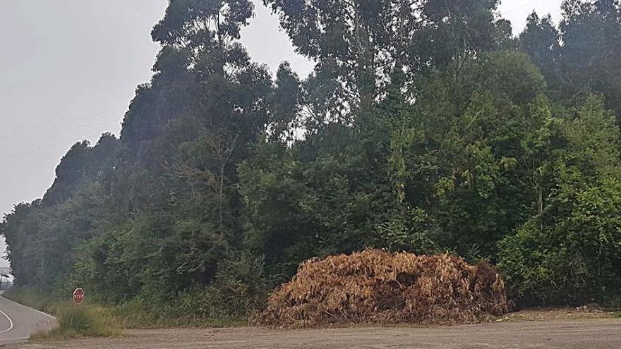 Alertan de un depósito de ramas secas que puede generar incendios