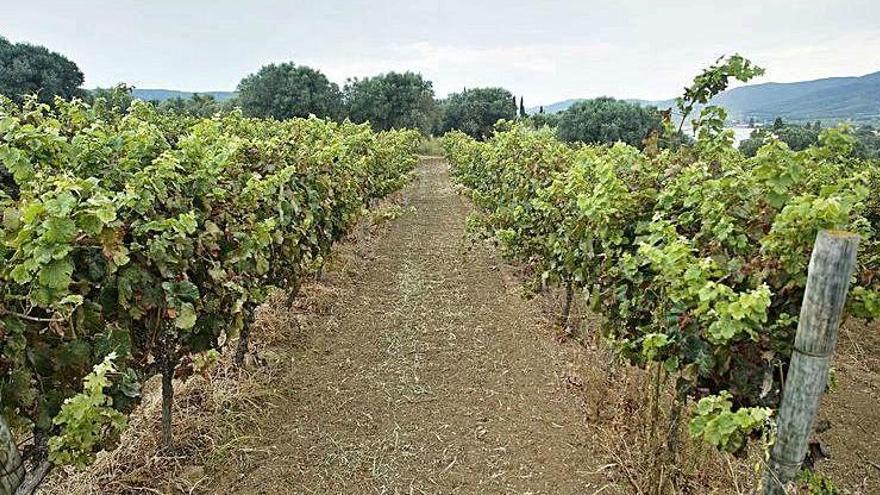 El nostre ric i premiat patrimoni vitivinícola