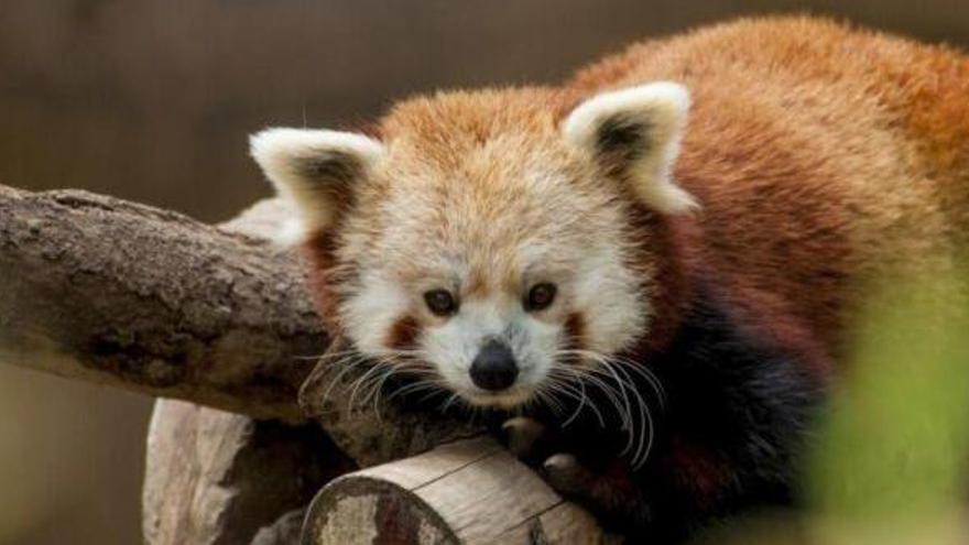 Ya hay un 68% menos de vida salvaje en la Tierra que en 1970