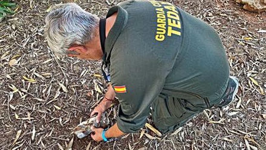 La Guardia Civil retira un proyectil antiguo hallado en la playa de Son Bou