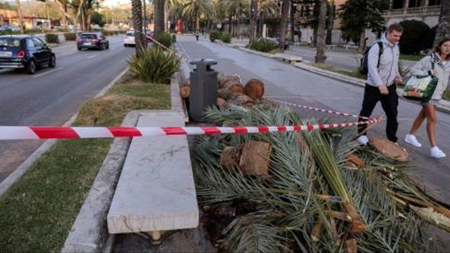 Paseo Sagrera in Palma wegen starker Windböen gesperrt