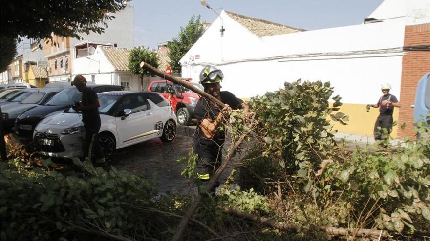 Los bomberos retiran una rama caída junto a la puerta del colegio Torre Malmuerta