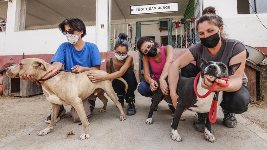 «La etiqueta de peligroso es un lastre injusto para estos perros»