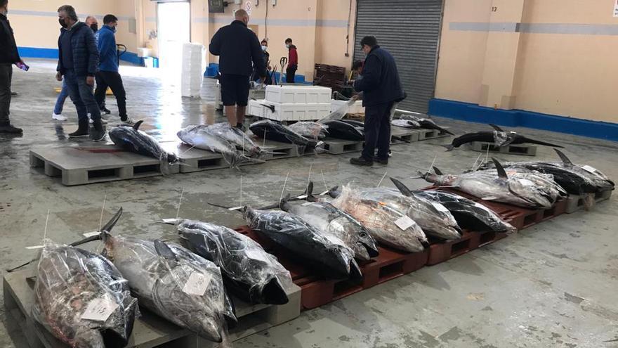 """Pescadores exigen ampliar la """"ridícula"""" cuota de atún rojo"""
