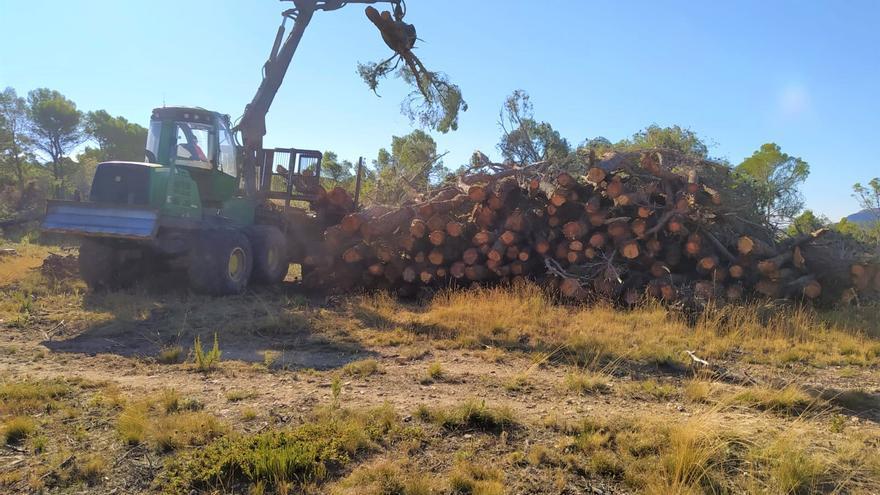 Inician la retirada de los miles de pinos destrozados en La Carrasqueta