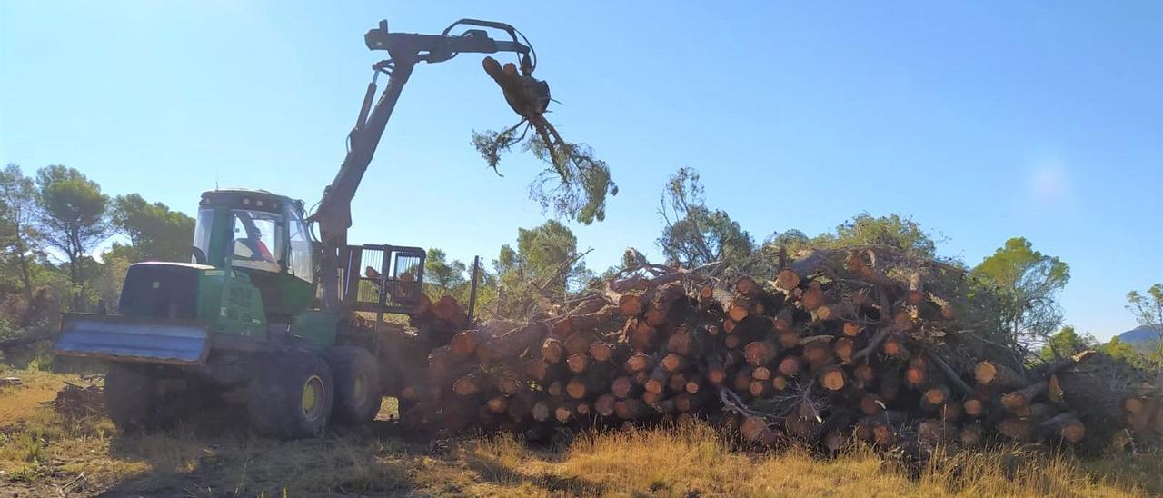 Una máquina amontona, el pasado viernes, los pinos talados en La Carrasqueta para su posterior triturado.