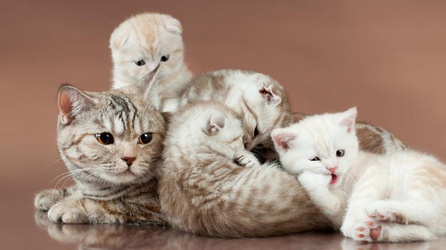 Las diez enfermedades más comunes de los gatos