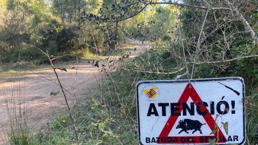 """Els pagesos gironins alerten que la població de senglars està """"desbocada"""""""