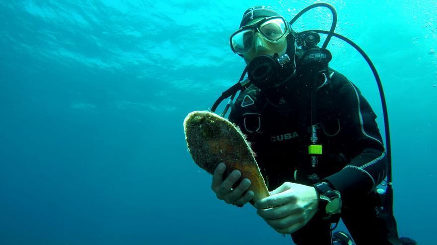 Hallan la clave para la recuperación de la nacra, el molusco casi extinguido en Baleares y el Mediterráneo