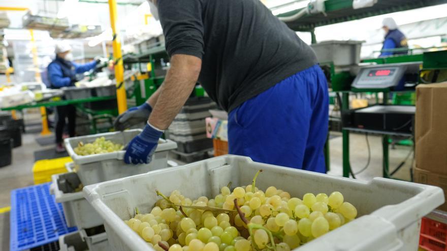 La Unió denuncia la presencia de pesticidas prohibidos en la uva de mesa importada