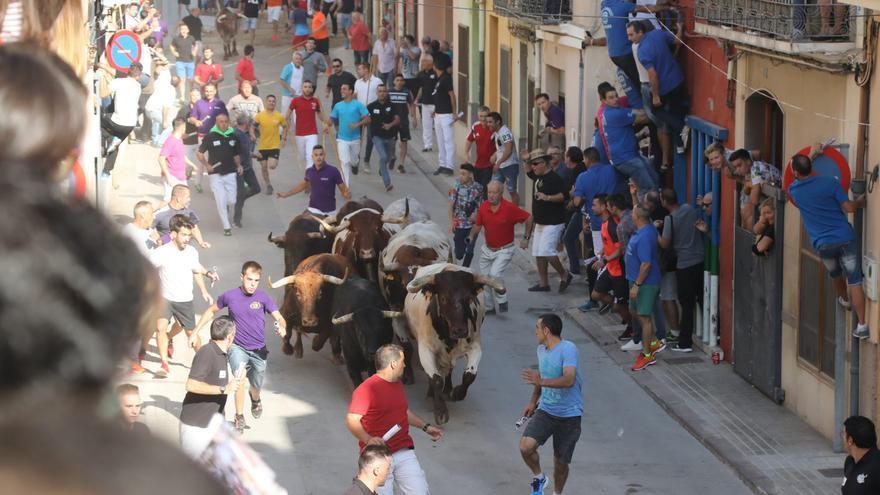 Agilizan los trámites para acelerar el retorno del 'bou al carrer' en octubre