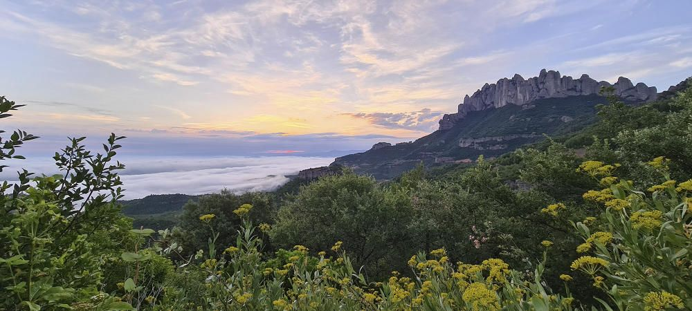 Albada amb Montserrat a la dreta i una catifa de núvols a l'esquerra.