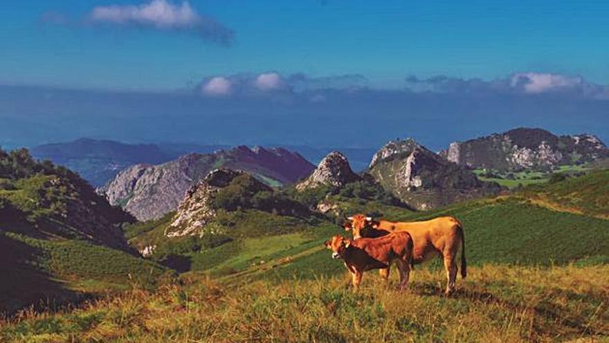 La gran familia de Ternera Asturiana
