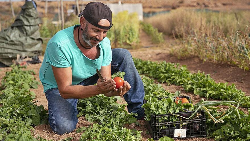 Fuerteventura apuesta por la agricultura ecológica como alternativa de futuro