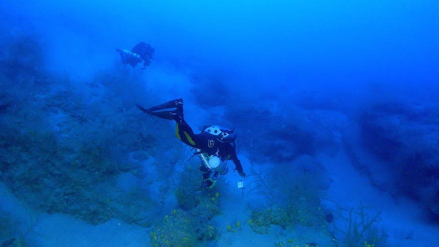 Los bosques de coral negro de Lanzarote cautivan a Europa