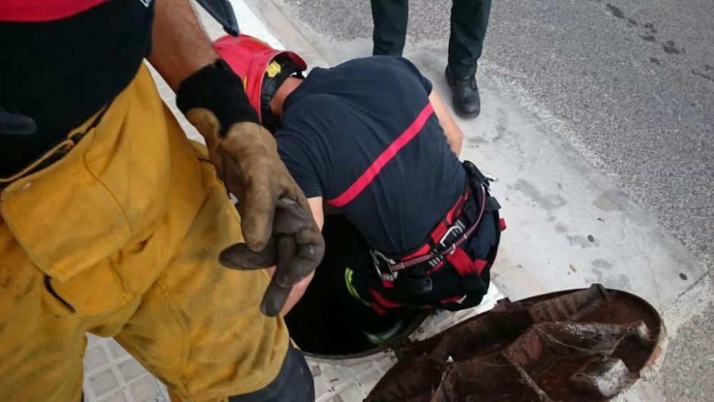 Rescatan a un perro atrapado en el alcantarillado en Villena