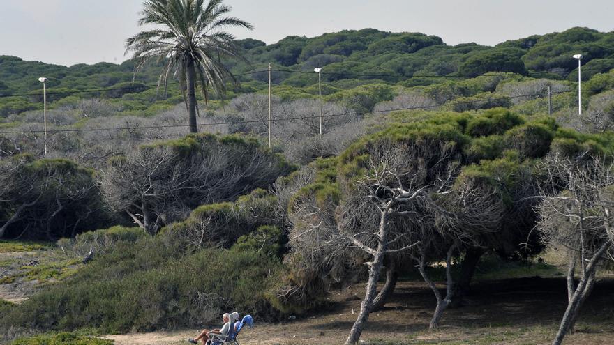 Un millón de euros para una puesta a punto de la pinada de La Marina