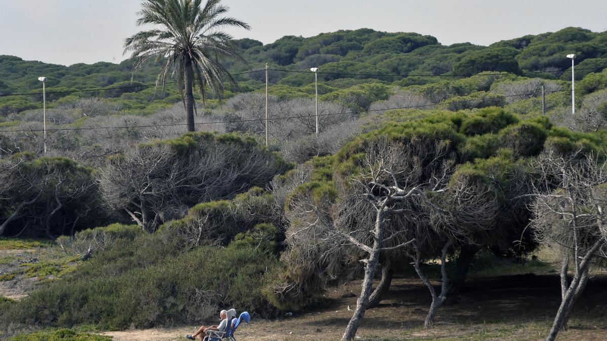 La pinada de La Marina, en una imagen de archivo