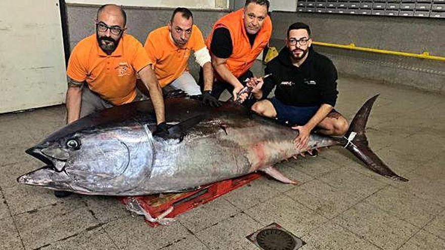 Madrid ultima subir el cupo de atún rojo y ampliar la campaña en el Archipiélago