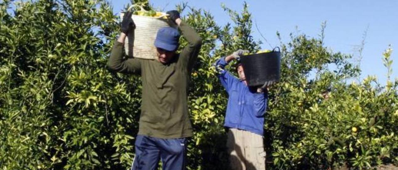 La agricultura tira de la economía y 2.000 ribereños logran un empleo