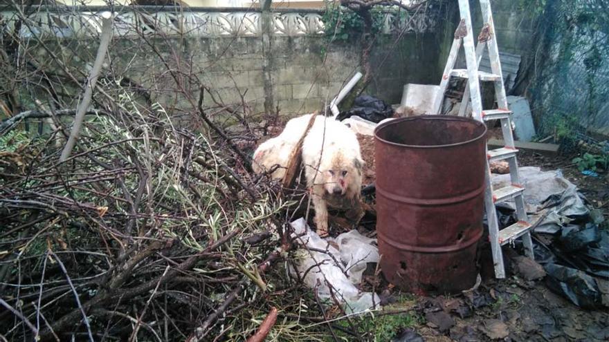 La Guardia Civil investiga a un vecino de Miño por maltrato animal