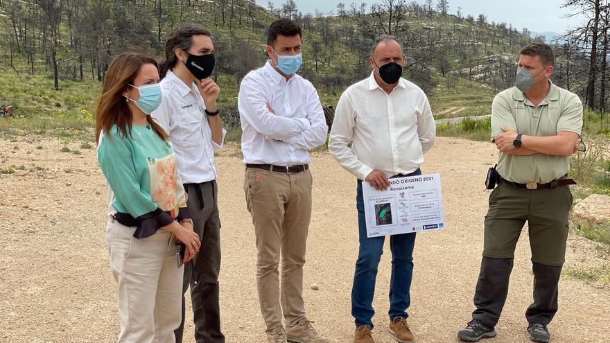 Recuperación forestal del paraje de El Puntal de Beneixama