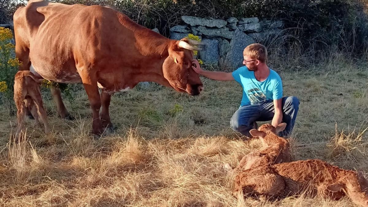 David junto a la vaca y alos terneros.