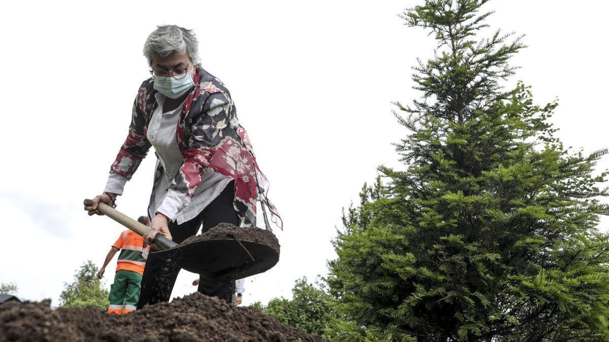 """Ana González, ayer, plantando un tejo en Los Pericones con motivo del proyecto """"Un árbol para Europa""""."""