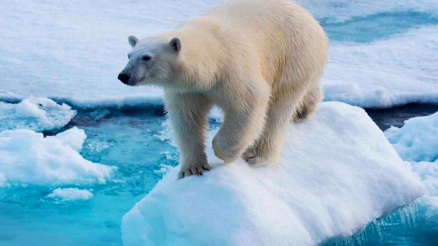 Buscar la tumba de Gengis Kan podría ayudar a la supervivencia de los osos polares