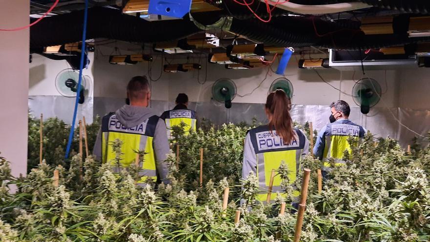 """La Policía incauta 4 toneladas de """"maría"""" y 25.000 plantas en el estado de alarma en Alicante"""
