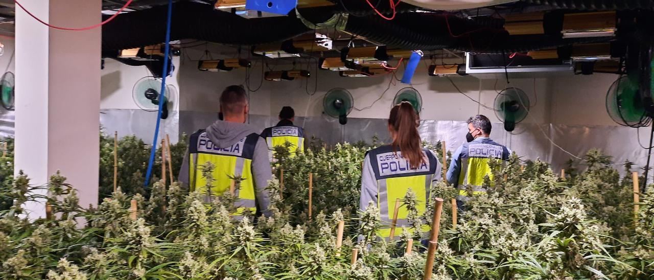 Agentes de la Policía en una plantación desmantelada en la provincia de Alicante.
