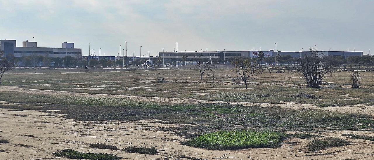 Imagen de los terrenos donde está prevista la ampliación del Parque Empresarial de Elche.
