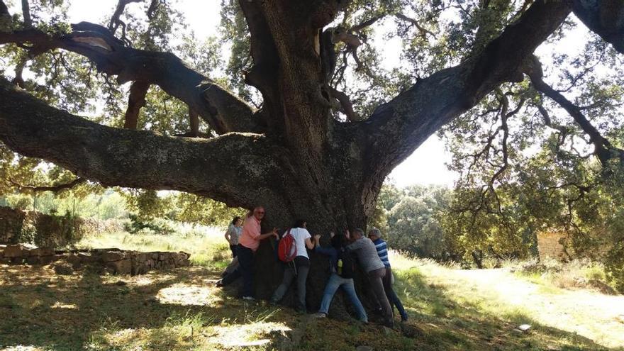 La Comunitat ya cuenta con 2.187 árboles monumentales
