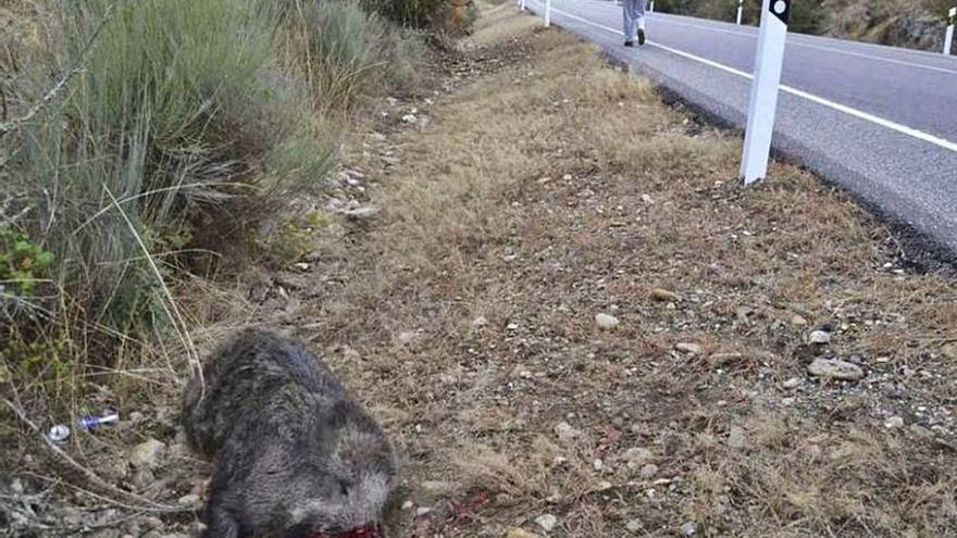 Las reclamaciones por accidentes con fauna caen a mínimos históricos en Zamora