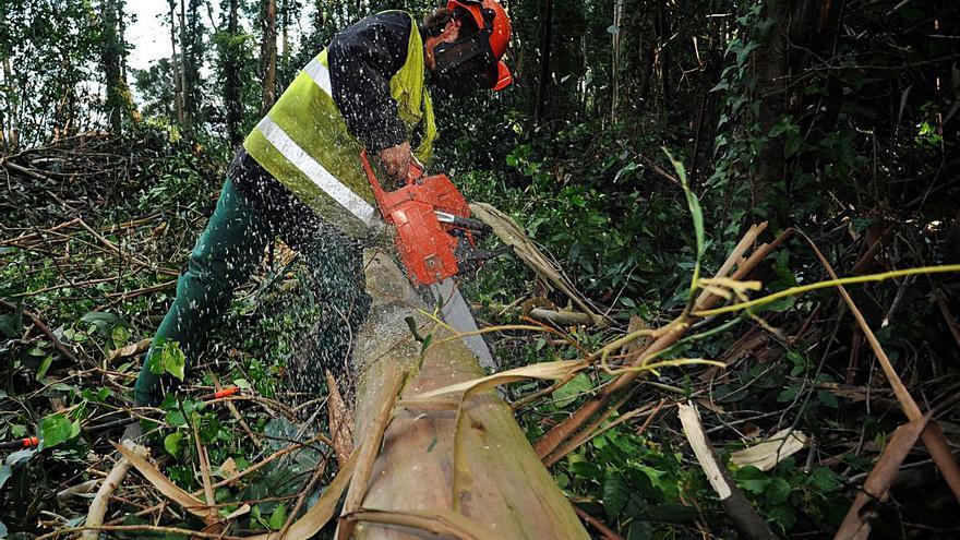 Los dueños de fincas forestales perdieron 50 millones por el bajo precio de la madera