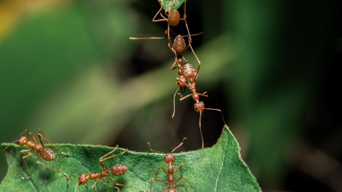 Remedios caseros | Trucos para eliminar las hormigas (formicidae) en casa