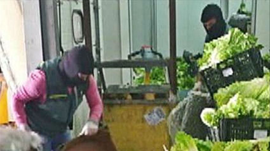Cae una banda que ocultaba droga entre la verdura