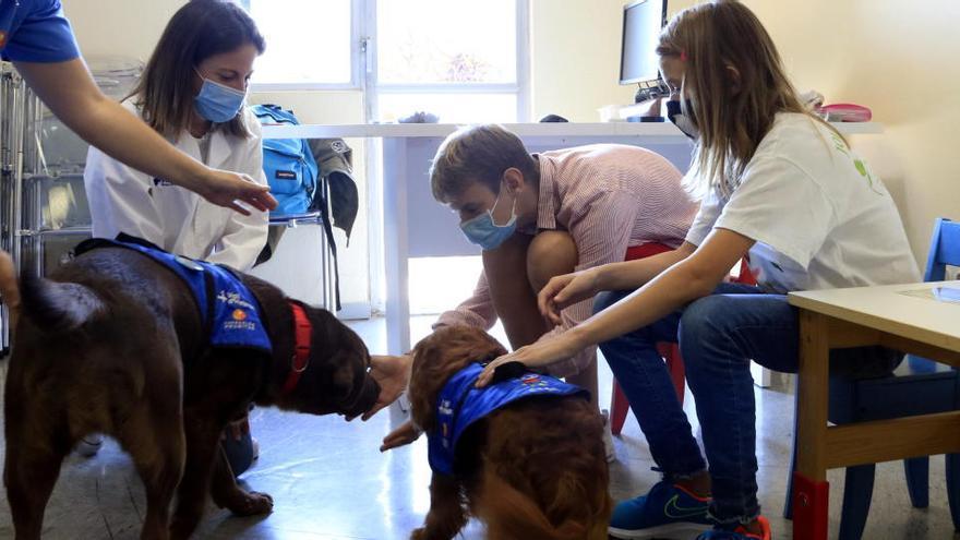 Vall d'Hebron demostra que la teràpia assistida amb gossos és eficaç per tractar la síndrome alcohòlica fetal