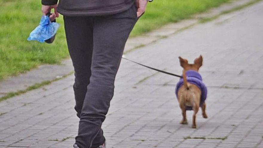 Amos i gossos a Figueres, debat obert sobre civisme i espais de passeig