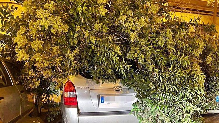 Un árbol cae sobre un coche en Palma