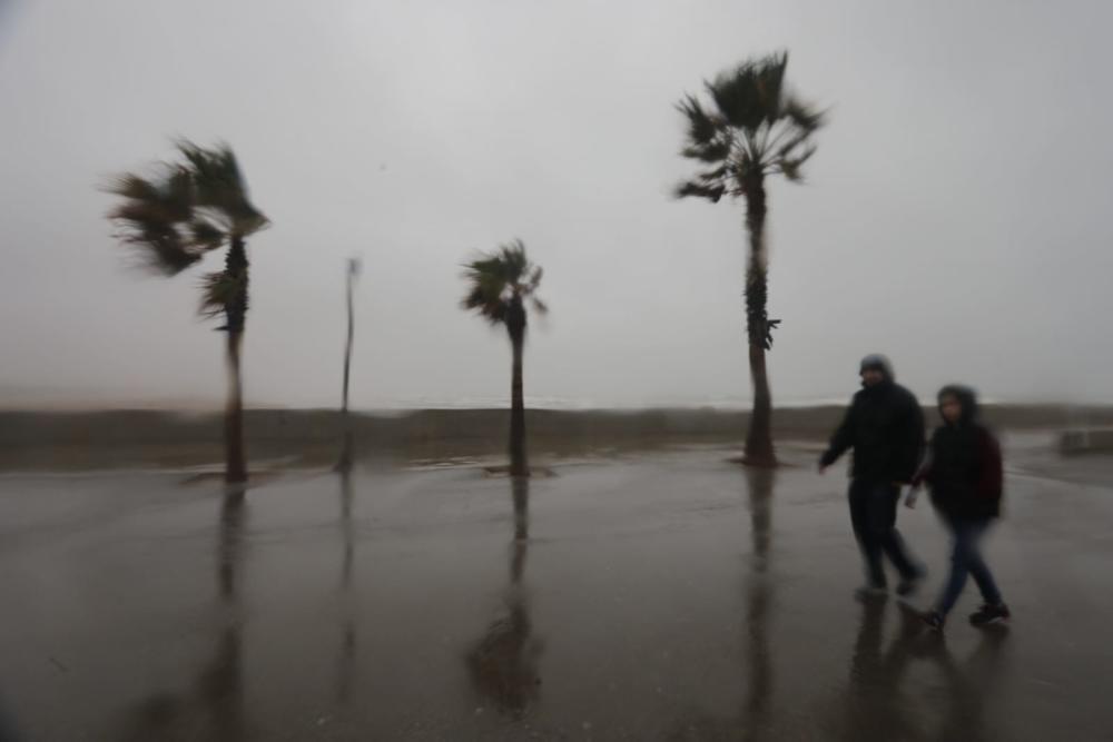 Playa de las Arenas y Marina de València