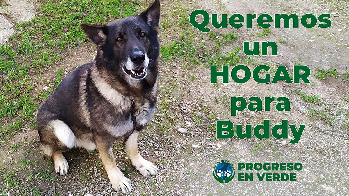 Campaña para que Buddy sea adoptado.